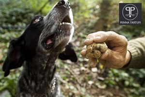 Cani Da Tartufo Migliori Razze Addestramento Vendita E Prezzi